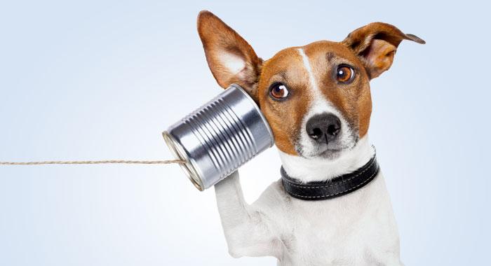 Telefonieren, aber richtig!