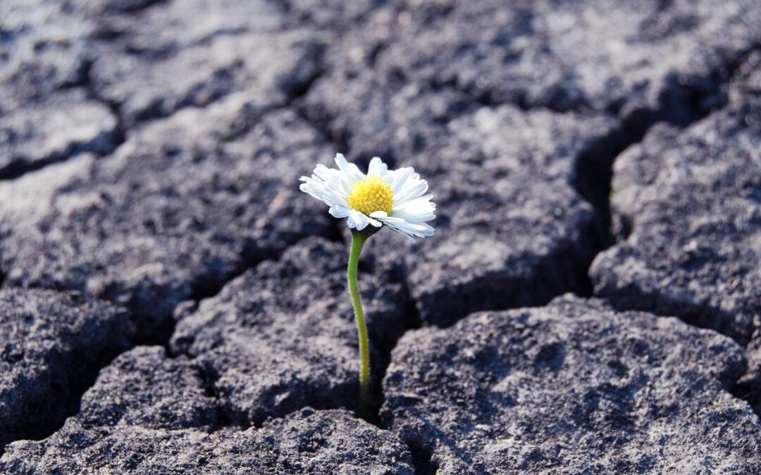 Resilienz kompakt